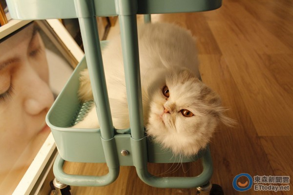 圆仔,招财猫立在咖啡上 北市「立体拉花咖啡」懒人包