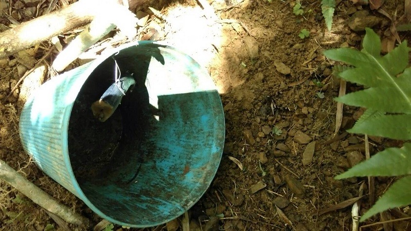 查获6个非法捕龟陷阱,官员忧心保育动物恐因此伤亡