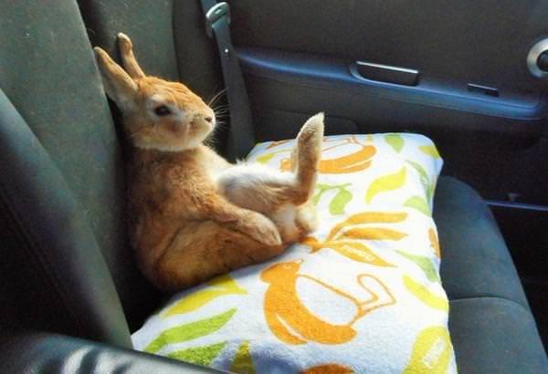 可爱萌兔壁纸图片大全