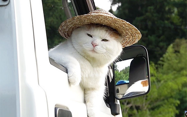 草帽农夫_农夫猫头顶小草帽:天气好热俺受不了(ω)