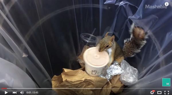 小松鼠直接把垃圾桶的奶昔搬走。(圖/翻攝自The Watercooler/YouTube) 國際中心/綜合報導 生活在城市中的許多動物,時常需要面臨找不到食物吃的窘境,有些就會跑去翻垃圾桶,試圖找到能夠果腹的東西。紐約有一隻小松鼠被路人拍到在垃圾桶裡翻呀翻,發現了一杯還有剩餘的奶昔,馬上整個杯子咬出來到旁邊品嘗,不但會開蓋子,整個身體都要埋進杯子裡了! 影片中的小松鼠似乎很有經驗,在垃圾桶翻到喝剩的奶昔,還知道要先把吸管抽掉,再將整個杯子帶到她認為安全的地方慢慢品嘗。雖然開蓋子的時候有點吃力,不過還是成