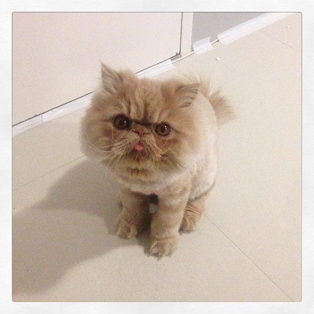 可爱猫咪带皇冠图片