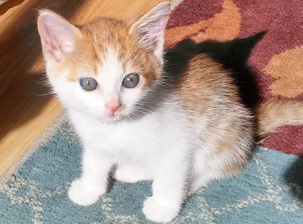小猫装箱放路边 留纸条:我妈咪的男朋友对我很坏