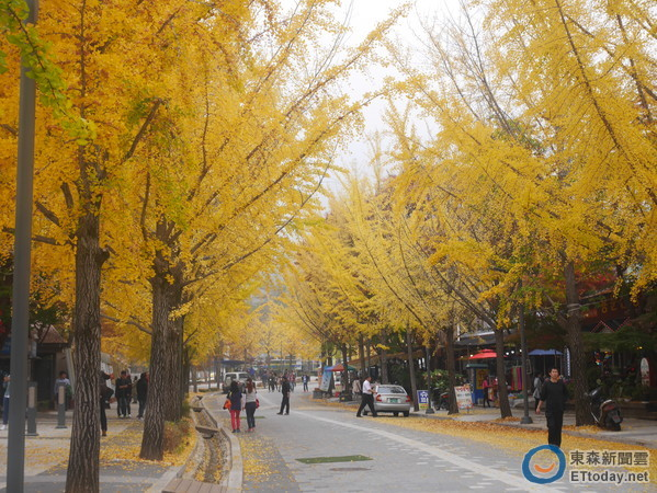 秋天不只赏枫!到杨平看千年黄金银杏树