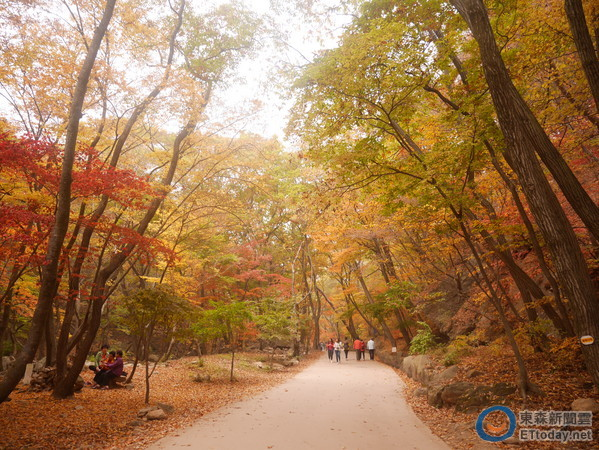 秋天不只赏枫!到杨平看千年黄金银杏树,骑铁道自行车