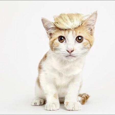 想要「戴帽子的猫」不再流浪! 摄影师拍出超萌模样