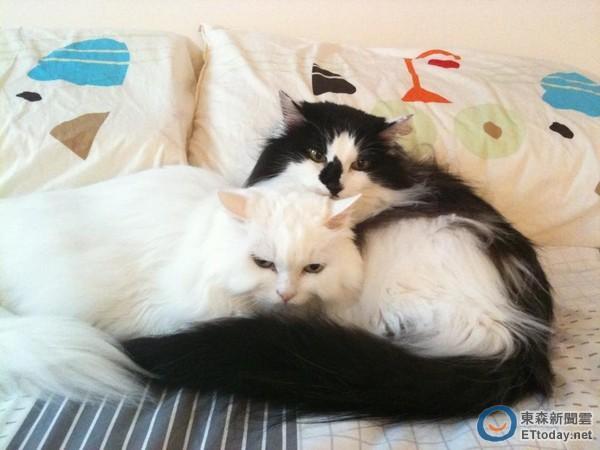 两只猫咪可爱睡觉温暖