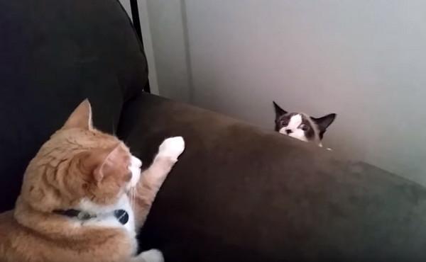 四处张望,突然沙发和墙壁的空隙中, 缓缓地出现了一颗惊恐的猫头,像是