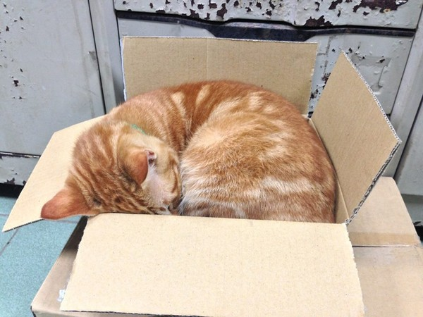 拥抱睡觉的画面,被拍照当成手机桌布,分享到「 宜兰县大里国小校猫