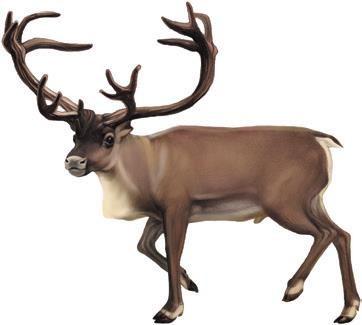 仿真麋鹿动物造型