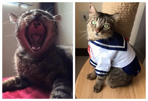 「没舌头的猫」穿衣服有原因