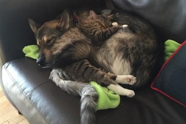 猫狗睡觉可爱图片