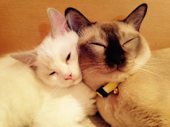 日本一名猫奴在twitter上分享两只爱猫的「闪光照」,它们名叫「小歌