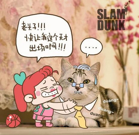大不敬恶搞胖脸猫表情图 帮猫咪打造情境吧!涂涂画画猫萌照