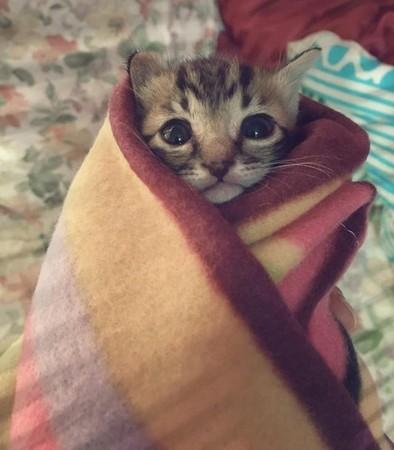 冷到不停发抖!好心上班族帮小猫包成「墨西哥卷饼」