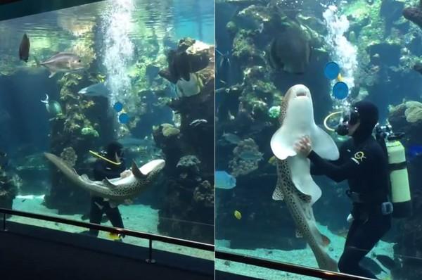 壁纸 海底 海底世界 海洋馆 水族馆 600_398