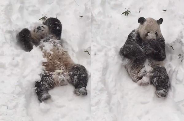 找出在动物园发现到北极熊大图