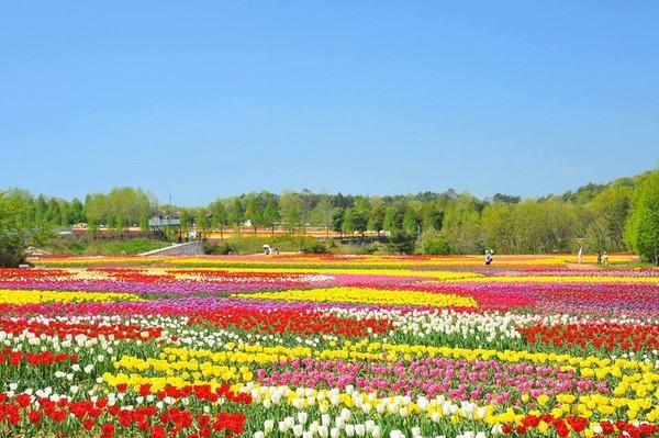 春季风景简笔画彩色