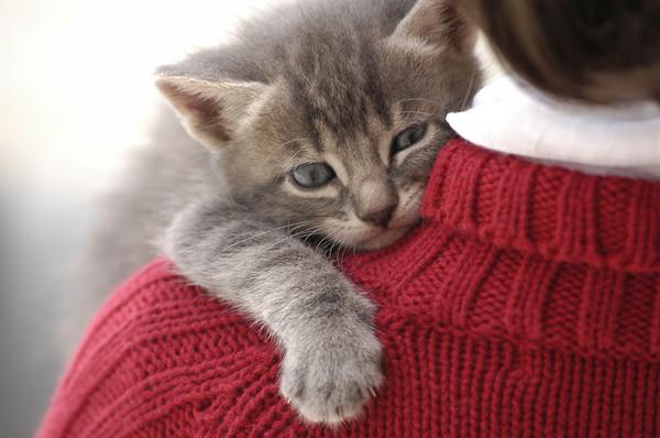 猫咪是很敏感细腻的动物,不是玩偶,跟它们拥抱有很多小撇步要注意.
