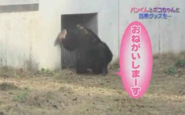 小庞现在住在动物园中.