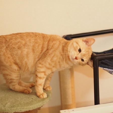 橘猫fuku实在很可爱啦!
