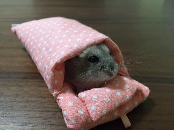 可爱小老鼠的造型