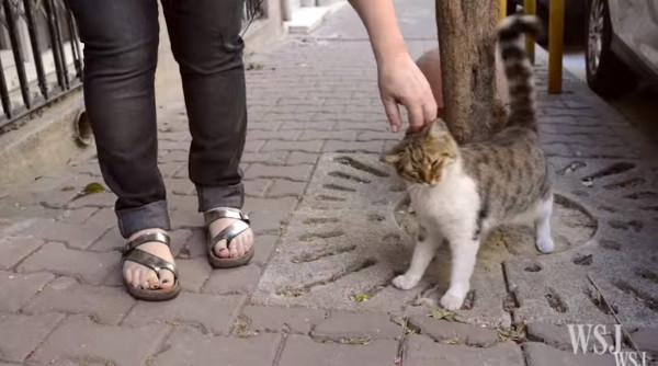 快摸我不要停!(圖/翻攝自Wall Street Journal/YouTube,下同) 記者易景萱/綜合報導 每個城市裡面都有數不清的流浪貓和狗,有些一輩子都找不到家,只能在路上遊蕩,下雨天淋得全身濕透。土耳其伊斯坦堡是一個對流浪貓非常友善的地方,所有眼前所見的喵星人都像國王般的存在,慵懶地在路邊曬太陽、或是和不認識的人磨蹭撒嬌都是很常見的事情。 伊斯坦堡有數以千隻的流浪貓每天在街上跑來跑去,每一隻都不用煩惱食物的問題,或是下雨的話會不會沒有地方去,每一隻貓咪都受人喜愛。幾乎所有店家都可以帶寵物進去,