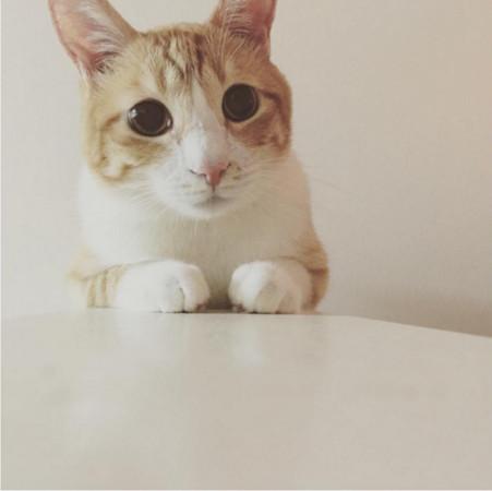 壁纸 动物 猫 猫咪 小猫 桌面 451_450