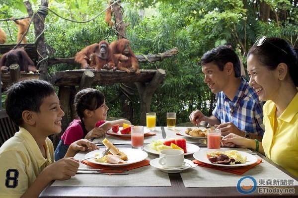 在新加坡动物园,旅客可与红毛猩猩在丛林里共进早餐.