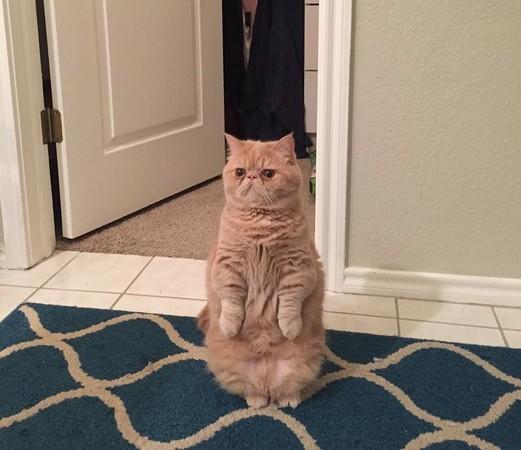 加菲猫怎么画,怎么画加菲猫