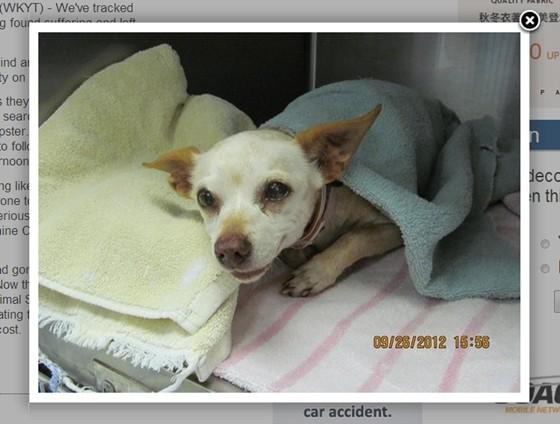 國際中心/綜合報導 美國肯塔基州的一處公寓大樓裡,有位居民Calvin King日前到公共垃圾車附近倒垃圾時,發現裡面竟然有一隻受傷的吉娃娃混種犬,不但有傳染病,身體上還有許多大大小小的傷口,趕緊聯合附近鄰居把牠救起,送往動物控制中心照顧。  吉娃娃混種犬被社區住戶齊力救出,現在正養病中。(圖/取自wkyt.