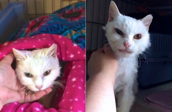 愿意露出自己的肚子和安德森打闹,现在更是成为了身上涂白胶的黏人猫