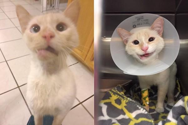 车祸让它下巴歪掉却仍努力呼噜 白猫手术后变「微笑喵