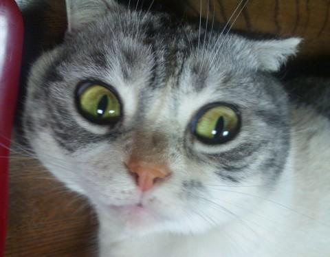 猫咪惊讶表情大集合图片