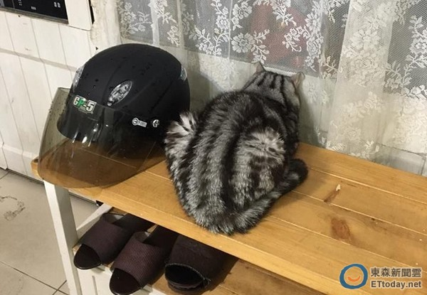 这圆润的背影啊~(图/网友蔡小姐授权提供,下同)