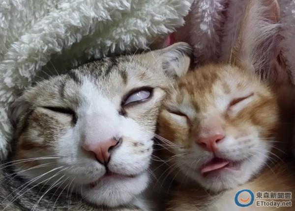 小猫睡到翻白眼张嘴 主人:你把橘猫的脸都丢死了啦!