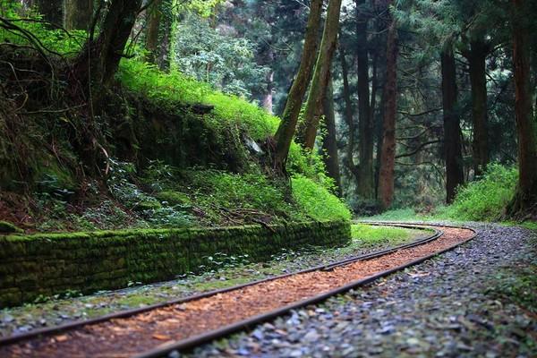 阿里山国家森林游乐区的水山巨木步道.