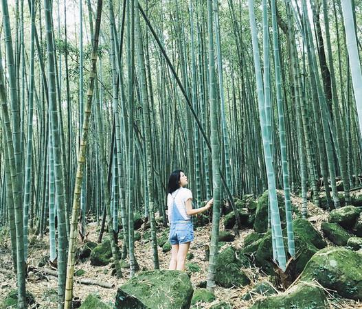 台版「岚山竹林小径」在这!精选全台3处竹海秘境