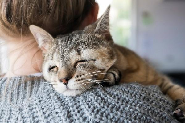 萌萌虎斑小猫天生少了眼睑 手术后终於可以闭眼睡觉了