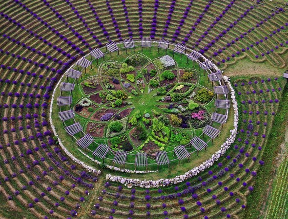 迷宫平面图 植物