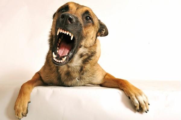 狗狗使出「汪汪攻击」4个原因...毛孩OS:我要保护马麻!