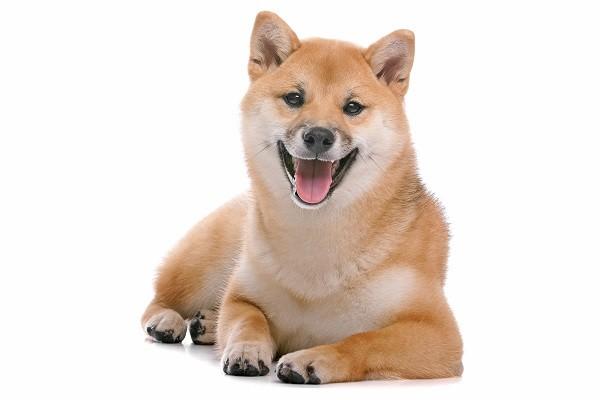 汪星人智商多高? 「5个小测验」看出狗狗聪明程度!