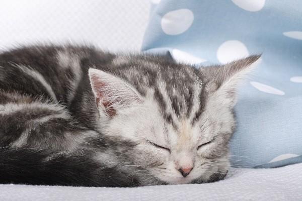 出去玩毛孩怎办?做到「5事」就稳啦! 猫想要舒服的床床