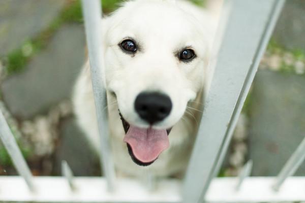狗狗真的会装无辜? 研究:眼神「水汪汪」想吸引你注意