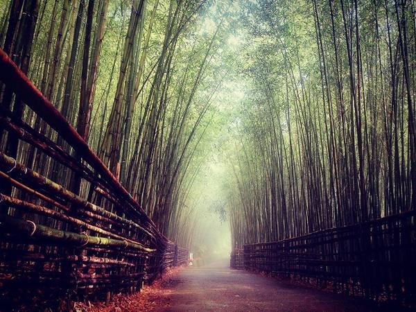 除了像京都岚山竹林小径,满山遍野的竹林直冲云霄,型塑出宛如《卧虎藏
