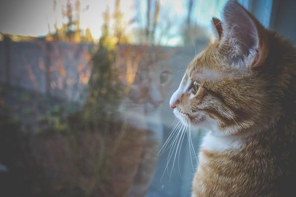 家有肾猫必知「10件重要事」! 让喵喵陪你长长久久