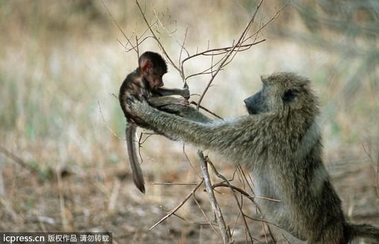 动物世界也有温馨母爱