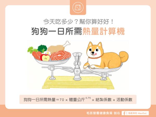 狗狗一天要吃多少? 「热量计算机」算给你看...别多喂