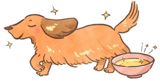 靠饮食养出好「毛」孩! 「5种油脂」狗狗吃多吃少都不好