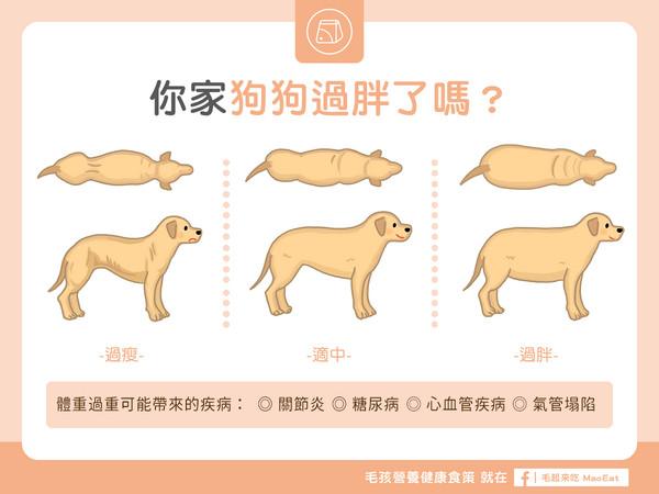 你家狗狗过胖吗? 「3种体型」比一比...没腰还有救啦